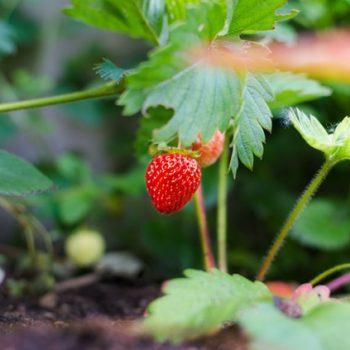 Does Gardening Improve Dementia?